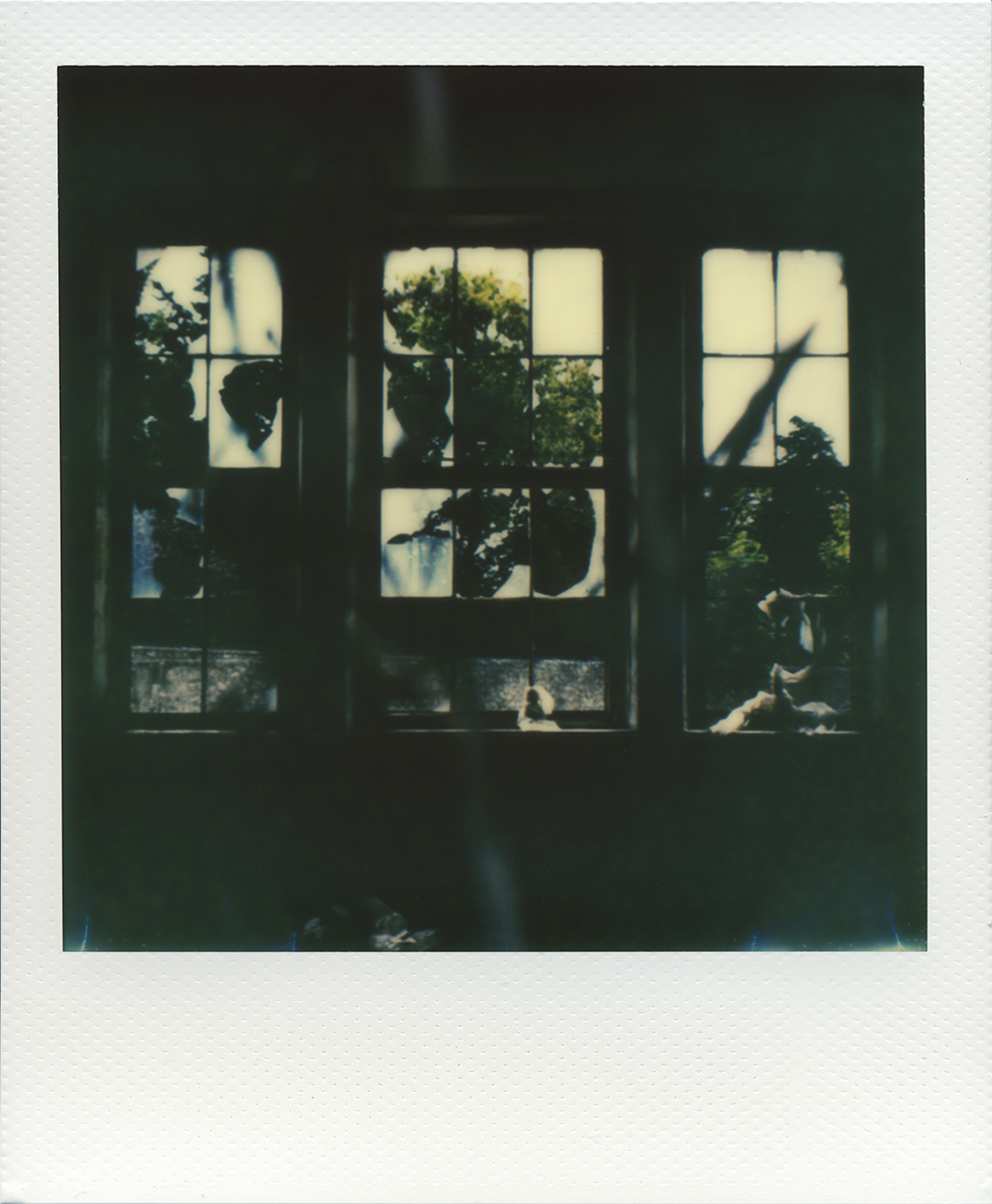 Pola windows 01