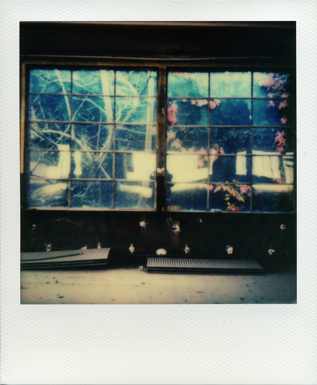 Pola windows 05