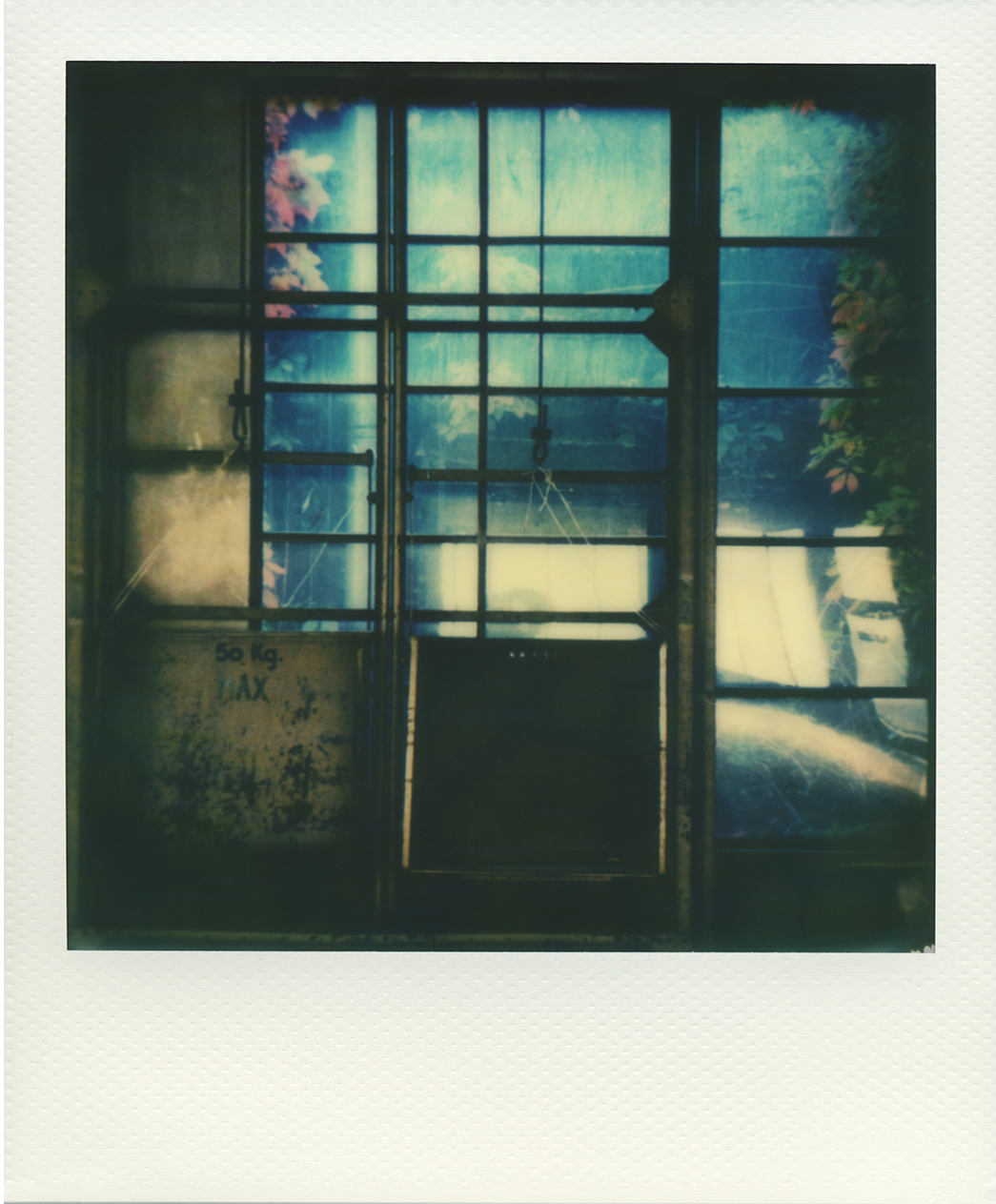 Pola windows 09
